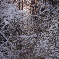 Лыжная прогулка :: Helga Sergeenko