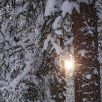 луч солнца в снежном царстве :: Helga Sergeenko
