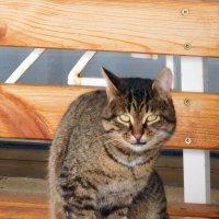 Кот на скамейке :: Оливер Куин