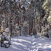 Готовится февраль сменить январь... :: Лесо-Вед (Баранов)