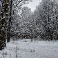 Снежно :: Владимир Филимонов