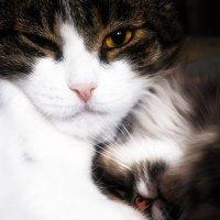 Любителям котов посвящается :: Штурман