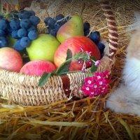 Мур, Мур..мышей всё ж я люблю больше..но так уютно на сеновале! :: TAMARA КАДАНОВА