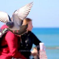 Любовь и голуби))) :: Irina Radzinsky