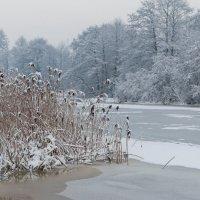 зима 3 :: Edita Rimkute