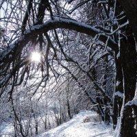 зимняя прогулка :: татьяна
