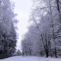 Снежное и нежное :: Galina M.