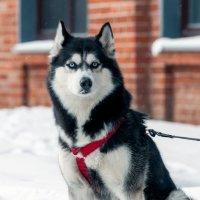 Глаза цвета полярной синевы :: Валерий Иванович