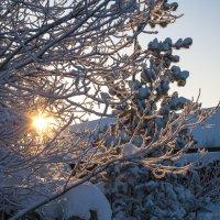 Мороз и солнце :: Дмитрий Костоусов