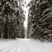 Зима#Зеленый город :: Ruslan