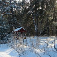 В зимнем лесу. :: Маргарита ( Марта ) Дрожжина
