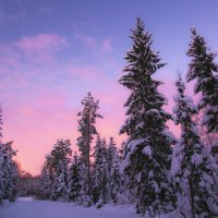 Вечерний свет манит нас в лес :: liudmila drake