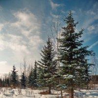 Мороз и солнце :: Юрий Кольцов