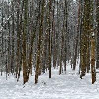Снегопад :: Valeriy(Валерий) Сергиенко