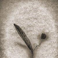 Зимние цветы :: Екатерина Рябинина