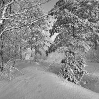 Серебро января :: Сергей
