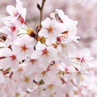 Весна в Нагоя Япония :: Alm Lana