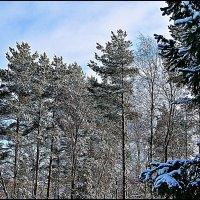 зимушка зима :: Валерий Викторович РОГАНОВ-АРЫССКИЙ