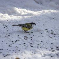 зимний лес, птички. :: юрий макаров