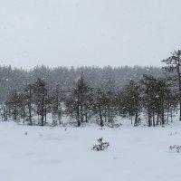 снегопад :: Галина