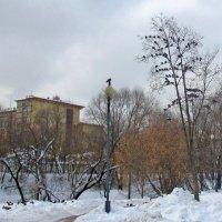 Птичьи посиделки :: Ольга Довженко