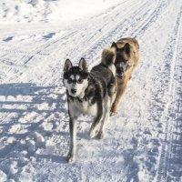 Прогулка по морозу. :: Марина Никулина