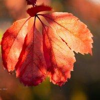 Осенний лист :: Александр Синдерёв