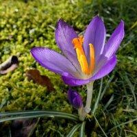 приближается весна :: Heinz Thorns