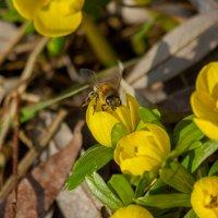 первые цветы :: vladimir