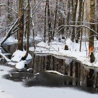 В поисках зимнего сюжета всегда что то попадется :: Григорий охотник
