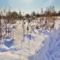 Зарисовки последнего месяца зимы :: Наталья Лакомова