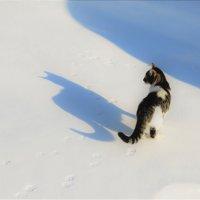 тени и кот :: НАТАЛЬЯ