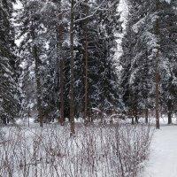 Зима не хочет уходить :: Самохвалова Зинаида