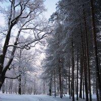 Зимний день в парке :: dli1953