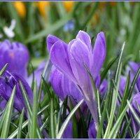 Поздравляю с Весной! :: ZNatasha -