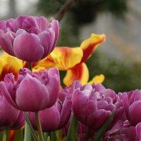 Весна стучится в дверь... :: ZNatasha -