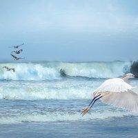 жизнь Тихого океана :: Svetlana Galvez