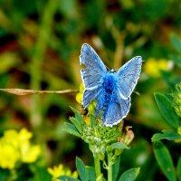 cкоро лето, бабочки...34 :: Александр Прокудин