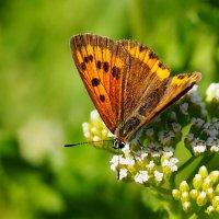 cкоро лето, бабочки...38 :: Александр Прокудин