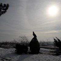 В дюнах :: Красоты Балтики