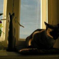 Две кошки :: Елена Минина