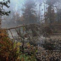 Укрывшись простынёй тумана..... :: Volodymyr Shapoval VIS t