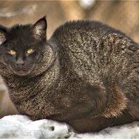Кот бегемот :: аркадий
