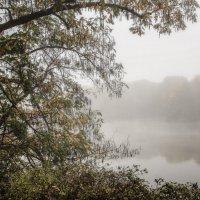 Парковые туманы :: Alexander Andronik