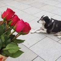 Собака и розы :: Наталья (D.Nat@lia)