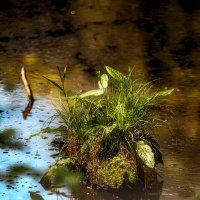Кочка на болоте :: Андрей Володин