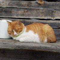 Сиеста рыжего кота. :: Жанна Викторовна