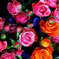 Розы. :: Штрек Надежда