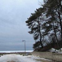 Побережье Финского залива :: veera (veerra)
