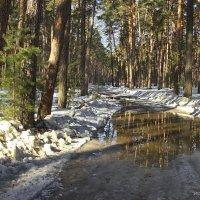 Смелеет талая вода лесного бездорожья... :: Лесо-Вед (Баранов)